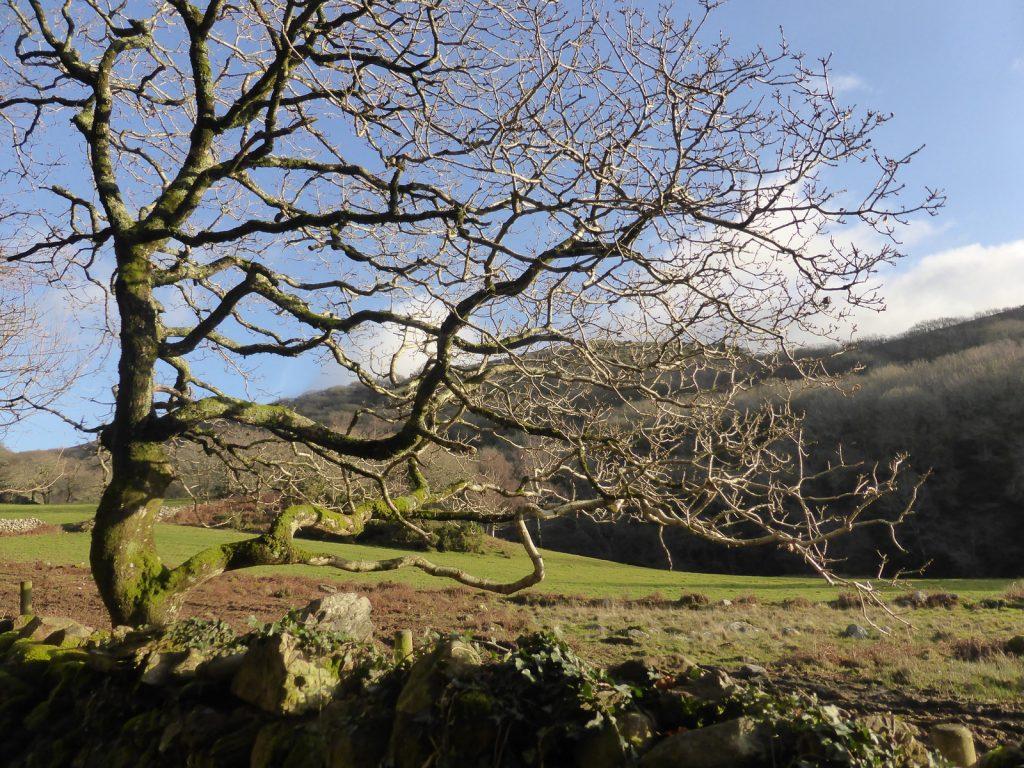hillside through horizontal twisting tree branches