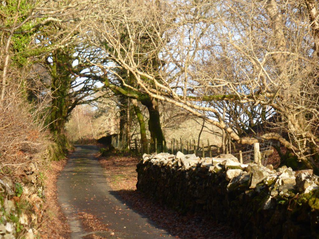 walled lane through wood
