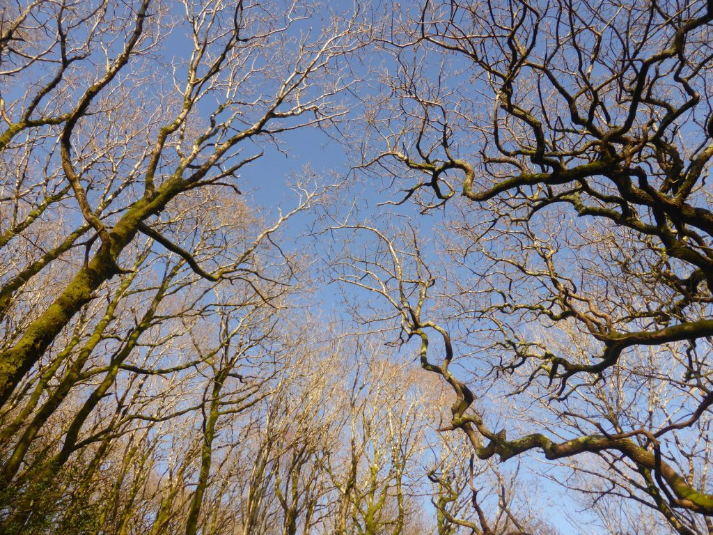 looking up through tree branches