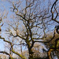 tree branches reaching out to blue sky