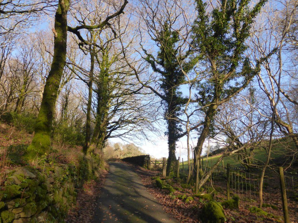 tree shadows on walled lane