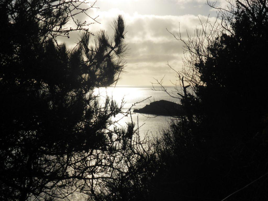 silvery sea, black pine branches