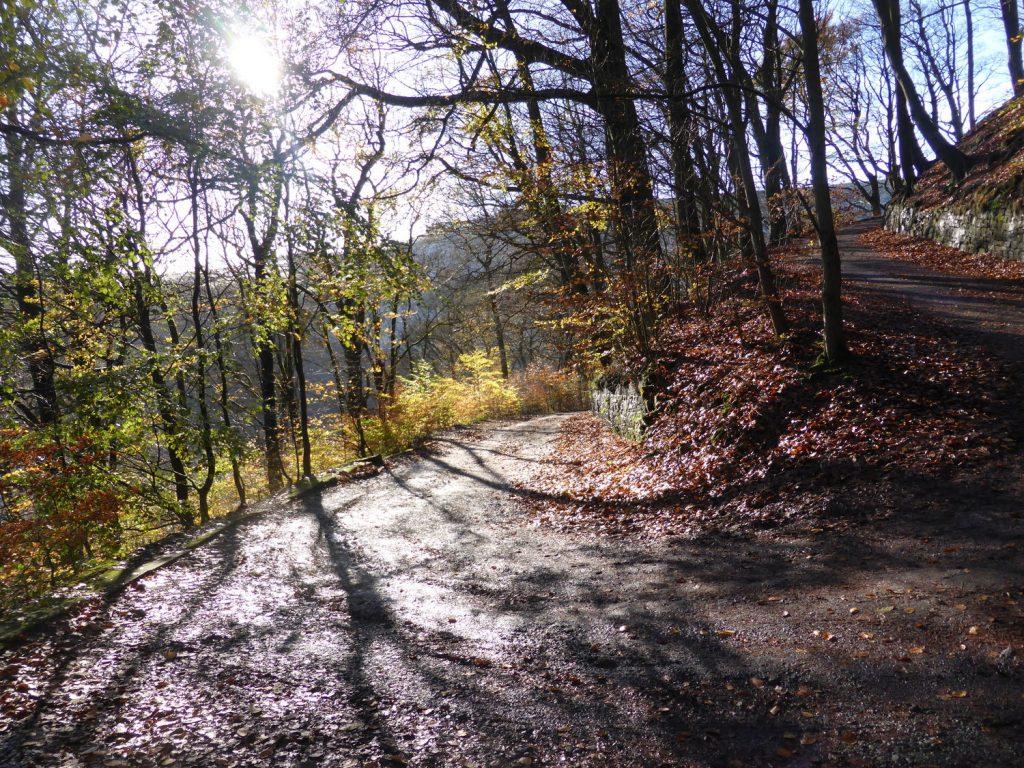 corner of lane with sunlit through saplings