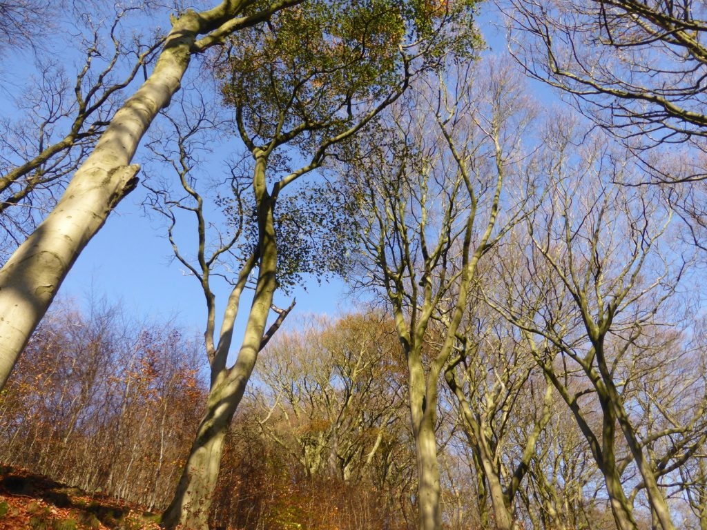 branches and pale blue sky