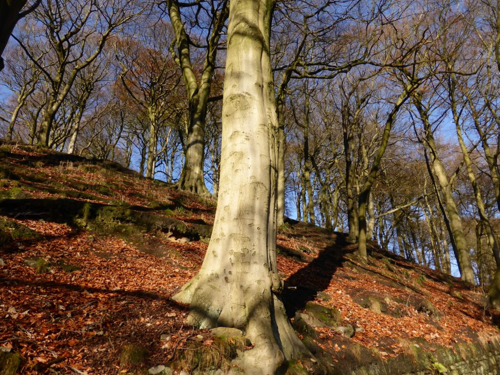 looking up at strong tree trunk on wooded hillside