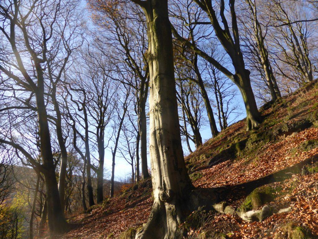 tree trunks on hillside against blue sky