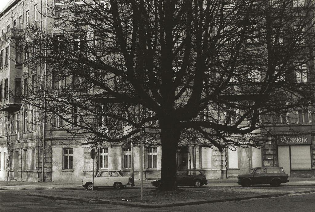tree in square